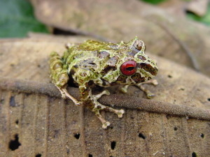 Frog diversity abounds in Ecuador