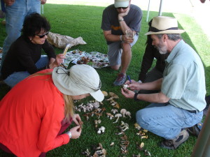 Dr. Kassenbrock demonstrates identification techniques to interested mushroom foragers